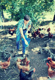 Man farmer giving feeding stuff to chickens Royalty Free Stock Photo