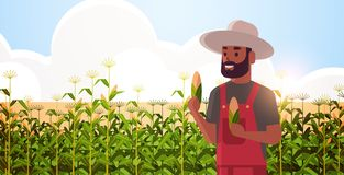 Free Man Farmer Holding Corn Cob African American Countryman In Overalls Standing On Corn Field Organic Agriculture Farming Stock Photo - 162412680