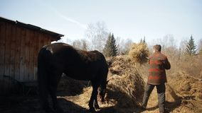 Man the farmer removes the hay. Man the farmer removes the hay and stroking the horse. HD stock footage