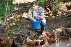 Man farmer strewing bird forage on country yard with chickens Stock Images