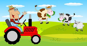 The man is a farmer on a tractor and cows on the meadow Stock Images