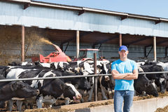 Man farmer working on farm with dairy cows Royalty Free Stock Photography