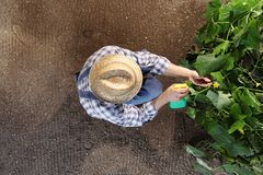 Man farmer working in vegetable garden, pesticide sprays on plan Royalty Free Stock Photos