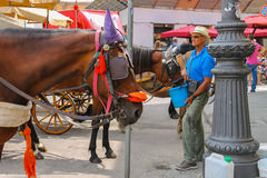 Man feed the horse on Piazza del Duomo in Pisa, Italy Royalty Free Stock Photo