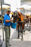 Man feed the horse on Piazza del Duomo in Pisa, Italy Royalty Free Stock Photos