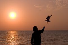 Man feeding bird. Picture of a man feeding a seagull at the beach Royalty Free Stock Photography