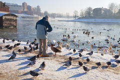 Man feeding birds royalty free stock photos