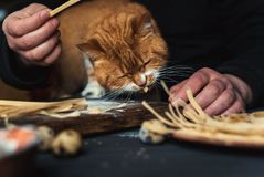 A man is feeding a cat in the kitchen. Near a table with homemade noodles and quail eggs Royalty Free Stock Image