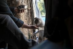 Man feeding cat in shed Royalty Free Stock Image