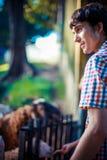 Man feeding cute sheep in the farm Stock Photos
