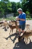 man feeding deer Royalty Free Stock Photography