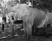 Man feeding elephant with wide open mouth. (All persons depicted are no longer living and no estate exists. Supplier grants that there will be no model release Royalty Free Stock Images