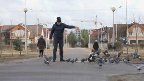 Man feeding flock of pigeons. In the street in spring stock video footage
