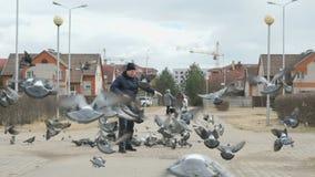 Man feeding flock of pigeons. In the street in spring stock footage