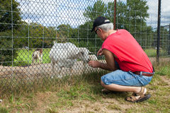 Man Feeding a Goat Royalty Free Stock Photos