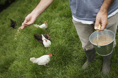 Man Feeding Hens On Grassland Royalty Free Stock Photos