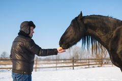 The man feeding horse Royalty Free Stock Image