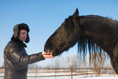The man feeding horse Royalty Free Stock Images