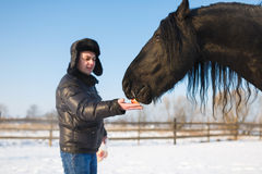 The man feeding horse Stock Image