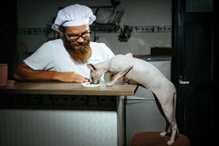 Man feeding hungry cat. Man feeding hungry Funny white cat on a kitchen royalty free stock photos
