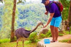 Man feeding ostrich on zoo farm, focus on ostrich Stock Photos
