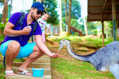 Man feeding ostrich on zoo farm, focus on ostrich Royalty Free Stock Photography