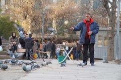 Man feeding pigeons stock photos