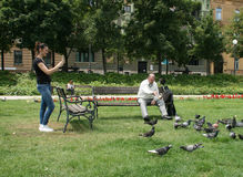 Man Is Feeding Pigeons Royalty Free Stock Image