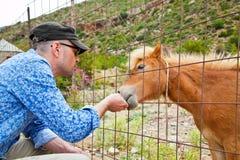 Man feeding pony Stock Photos