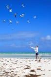 Man feeding sea gulls. Man on the beach feeding sea gulls Royalty Free Stock Photo