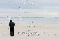 Man feeding seagulls Royalty Free Stock Photo