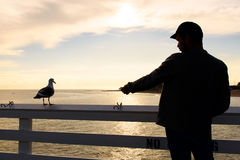 Man feeding seagulls on pier Royalty Free Stock Images