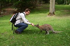 Man feeding small kangaroo. In the forest Royalty Free Stock Photography