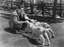 Man feeding two baby goats Royalty Free Stock Image