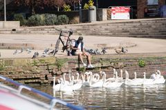 man feeding water birds including ducks, pigeons and swans royalty free stock photography