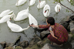 Man feeding a white swan. Young man feeding a white swan at the lake Royalty Free Stock Photography