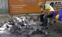 A man feeds birds and pigeons at the park Royalty Free Stock Photos