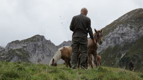 A man feeds a colt in a mountain scenery. Stock Photos