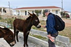 Man feeds donkeys Royalty Free Stock Image
