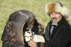 Man feeds golden eagle (Aquila chrysaetos) circa Almaty, Kazakhstan. Royalty Free Stock Photo