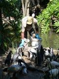 Man feeds penguins fish. Stock Photo