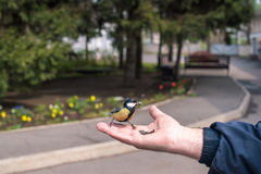 Man feeds the real bird Royalty Free Stock Photography