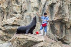 A man feeds a seal in Ocean park. Hong Kong, China. July 2018 stock photos