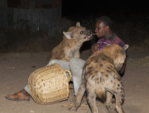 Man feeds a spotted hyena in ancient city of Jugol. Harar, Ethiopia. Royalty Free Stock Photo
