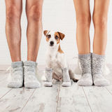 Man, female and dog in socks stock photos