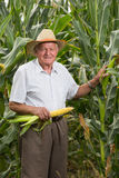 Man on field corn with corn ears Stock Image