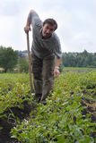 The man on field of potatoes Royalty Free Stock Image