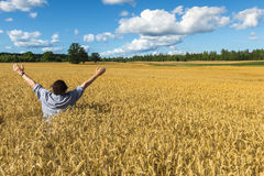 Man among the field of ripening cereals Royalty Free Stock Photo