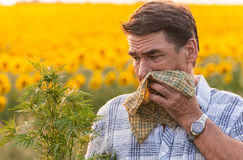 Man in the field suffers from allergies. Man in field blowing his nose and suffering from hay fever Stock Photography