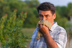 Man in the field suffers from allergies. Man in field blowing his nose and suffering from hay fever Stock Photo
